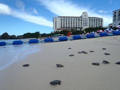 ホテル日航アリビラ 海亀