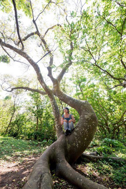 大石林山・不思議な木