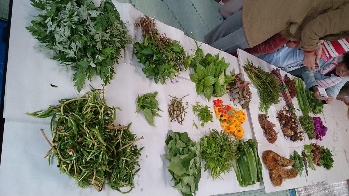 ヤンバルの山菜ツアー