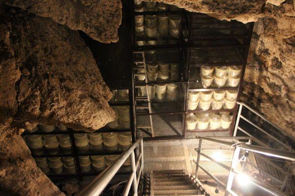 鍾乳洞古酒蔵 龍の蔵