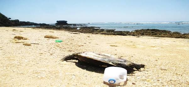 NPO法人 自然体験学校「白砂のビーチで学ぶ ~海洋ゴミとマイクロプラスチック~」