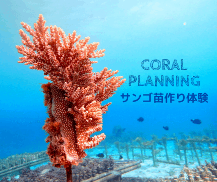 沖縄から自然環境を学ぶ!サンゴの不思議ツアー【SDGs×エシカル】